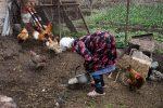 Auf die Hühner bekommen Frühstück