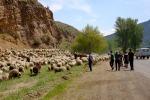 Schafe mit 3 Fotografen mittendrin (der 4. liegt flsch auf dem Boden) genau beobachtet von den Hirten
