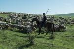 Eine der zahlreiche Herden