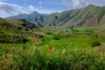 Traumhafte Landschaften, intensive Farben, Blumen und Kräuter, soweit das Auge reicht.