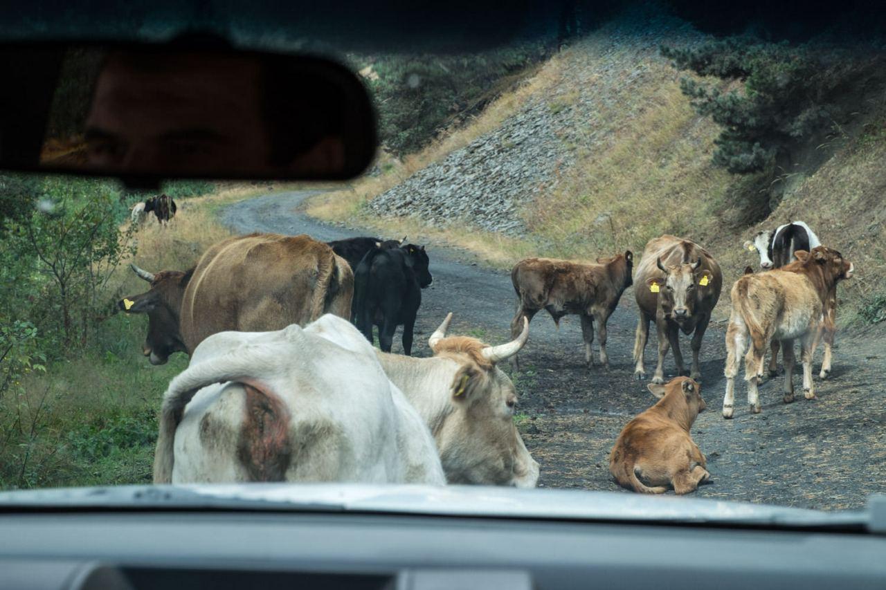 Die Rindviecher fühlen sich auch eher gestört.