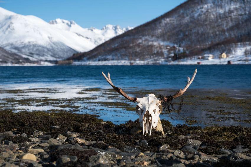 Ein offenbar etwas zu lang im Wasser gewesener Elch erweckt unsere Aufmerksamkeit