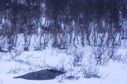Und einen Elch haben wir auf der Rückfahrt auch gesehen. Muss ja dokumentiert werden :-)