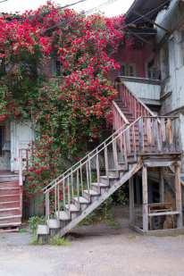 Ein Rosengarten...