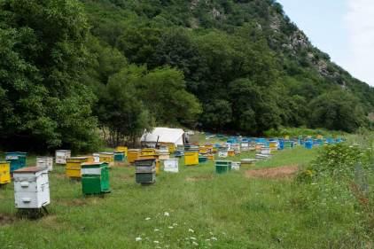 Fleißige Immen produzieren 4,5 Tonnen Honig
