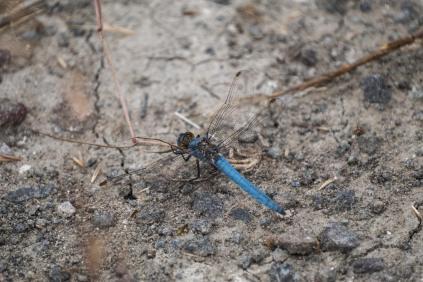 Landung in blau