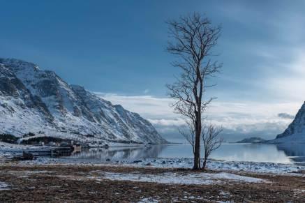 Ein Baum... selten hier