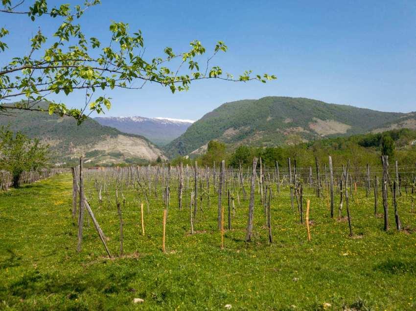 Wein vor dem großen Kaukasus